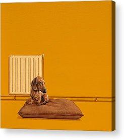 Dog Art Acrylic Prints