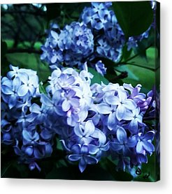 Orchids Acrylic Prints