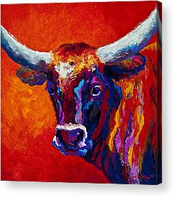 Cattle Acrylic Prints