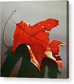 Nature Study Acrylic Prints