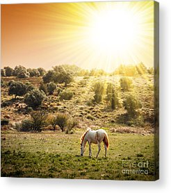 Beautiful Horse Acrylic Prints