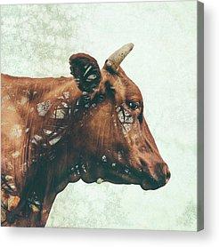 Farm Animals Digital Art Acrylic Prints