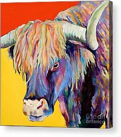 Highland Cow Acrylic Prints