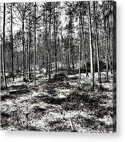Woodland Acrylic Prints