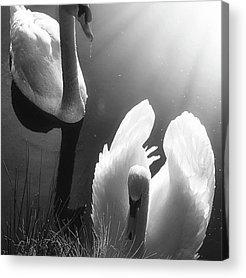 Birds Acrylic Prints