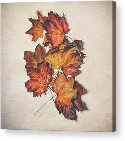Late Autumn Acrylic Prints