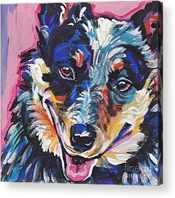 Cattle Dog Acrylic Prints