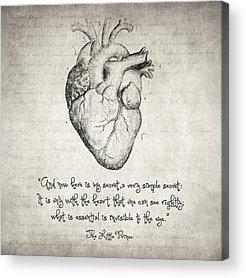 Medical Illustration Drawings Acrylic Prints