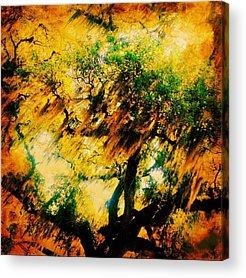 Edit Acrylic Prints