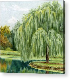 Weeping Willow Acrylic Prints