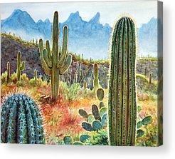 Saguaro Cactus Acrylic Prints
