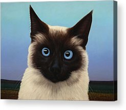 Cat Acrylic Prints