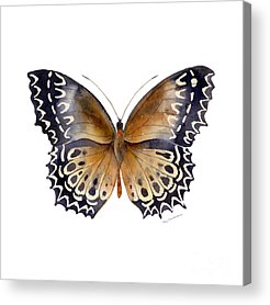 Moth Acrylic Prints