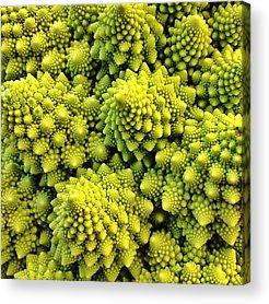 Broccoli Acrylic Prints