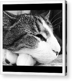 Pet Acrylic Prints