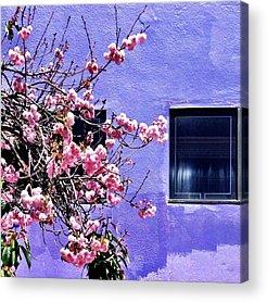 Purple Acrylic Prints