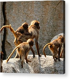 Animal Protection Acrylic Prints