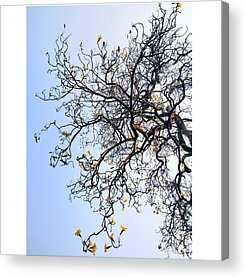 Autumn Acrylic Prints