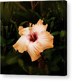 Yellow Hibiscus Acrylic Prints