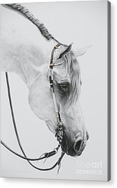 Western Pleasure Horse Acrylic Prints