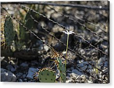 Acrylic Print featuring the photograph  A Flower Among Thorns by Amber Kresge