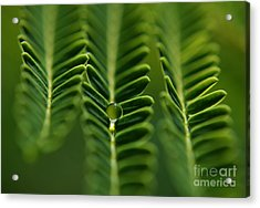 A Green Drop Acrylic Print by Michelle Meenawong