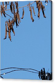 A Little Patience Pays. Acrylic Print