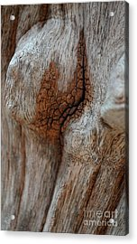 A Part Of A Trunk Acrylic Print by Michelle Meenawong