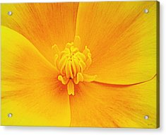 A Study In Yellow- Centerpiece 003 Acrylic Print by George Bostian
