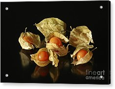 A Taste Of Columbia Physalis Aztec Golden Goose Berry  Acrylic Print by Inspired Nature Photography Fine Art Photography