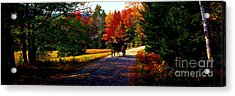 Acrylic Print featuring the photograph  Acadia National Park Carriage Trail Fall  by Tom Jelen