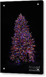 All Lit Up Acrylic Print by Jacqueline M Lewis