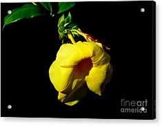 Acrylic Print featuring the photograph  All Yellow by Michelle Meenawong