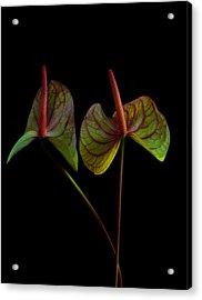 Anthurium 1 Acrylic Print