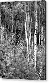 Acrylic Print featuring the photograph  Aspen Autumn  by Eric Rundle