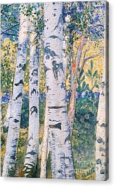 Birch Trees Acrylic Print by Carl Larsson