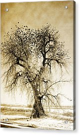 Bird Tree Fine Art  Mono Tone And Textured Acrylic Print