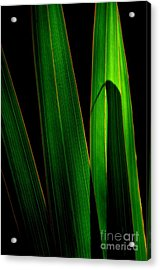 Black And Green Acrylic Print by Michelle Meenawong