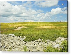 Blueberry Field With Blue Sky And Clouds In Maine Acrylic Print