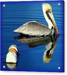 Blues Pelican Acrylic Print by Karen Wiles