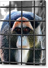 Brazza Inmate Acrylic Print by Alexey Dubrovin