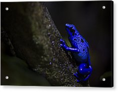 Brilliant Blue Acrylic Print