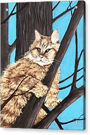 Cat On A Tree Acrylic Print by Anastasiya Malakhova