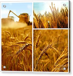 Collage Fields And Grain Acrylic Print by Boon Mee