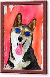 Cool Husky Acrylic Print