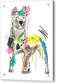 Cute Pit Bull Acrylic Print by Mark Ashkenazi