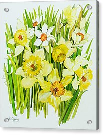Daffodils And Narcissus Acrylic Print by Joan Thewsey