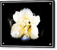 Acrylic Print featuring the photograph  Daylily by Michelle Frizzell-Thompson