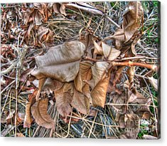 Acrylic Print featuring the photograph  Dead Leaves by Michelle Meenawong