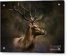 Deer Acrylic Print by Andrzej Szczerski
